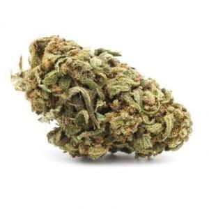g13 cannabis cbd