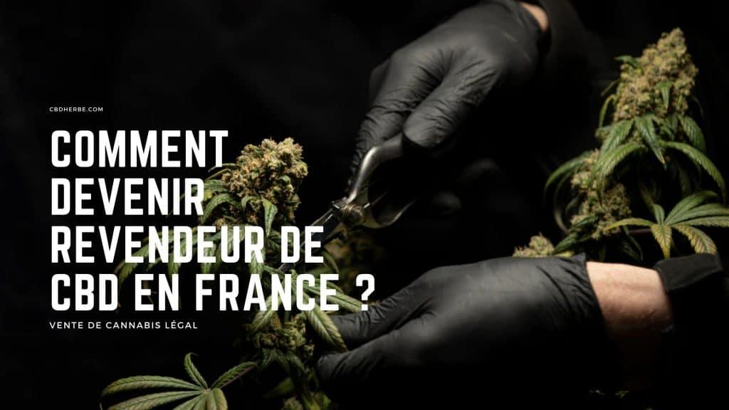 Comment devenir revendeur de cbd en France