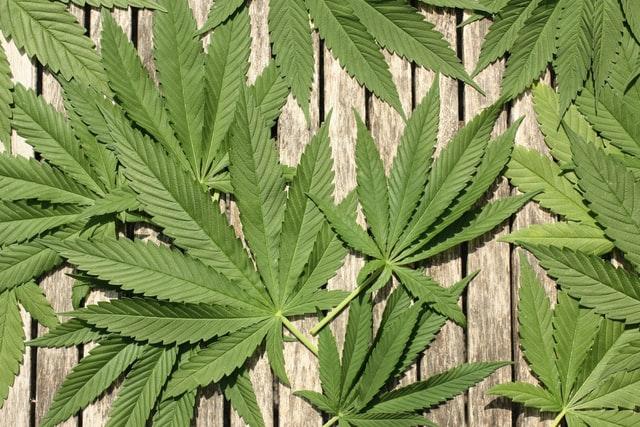acheter du cannabis thérapeutique